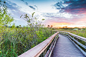 This is a horizontal, color, royalty free stock photograph shot with a Nikon D800 DSLR camera. It is a winter afternoon in South Florida's Everglades National Park, an international travel destination