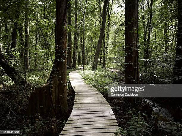 Boardwalk through a bald cypress forest, Maryland