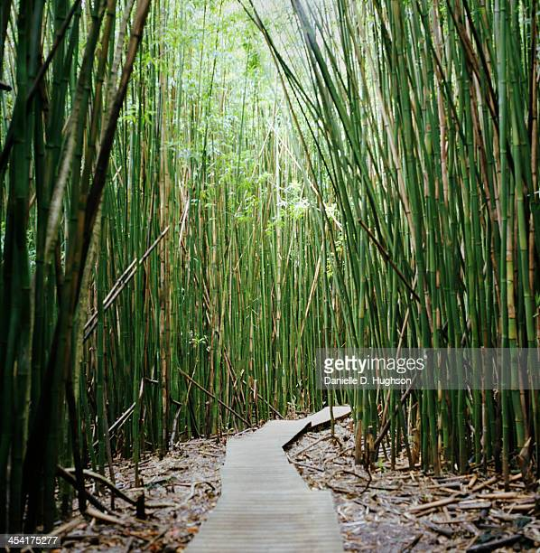 Boardwalk Through Bamboo Forest