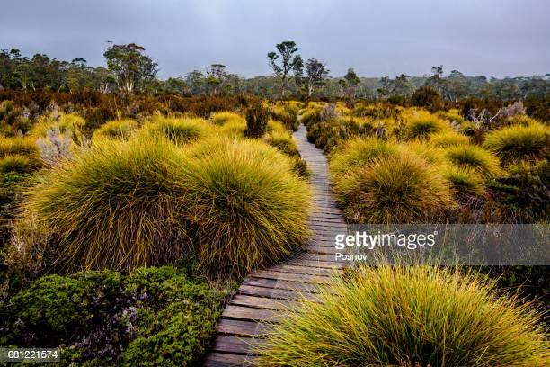 Boardwalk through button grass plains at Overland track, Tasmania