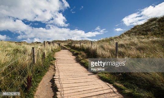 Board-walk through long grass's
