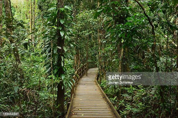 Boardwalk through rainforest