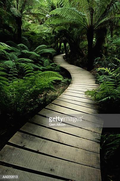 Boardwalk through rainforest