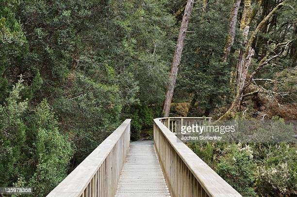 Boardwalk through temperate rainforest