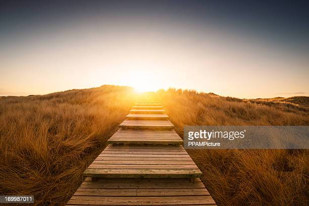 Boardwalk through the dunes