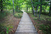 Boardwalk trail through wetlands and forest of Ludington State Park in the state of Michigan.