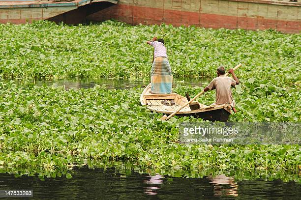 Boat in water hyacinth jungle