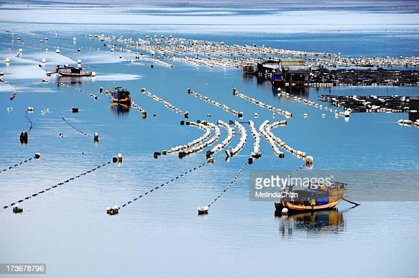 Boats on Kelp Plantation farm
