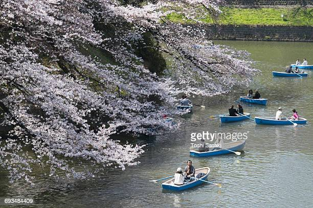 Boats under the Cherry blossoms at Chidorigafuchi.