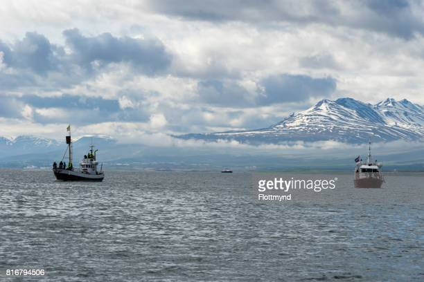 Boats waiting for Whales, Eyjafjordur Iceland
