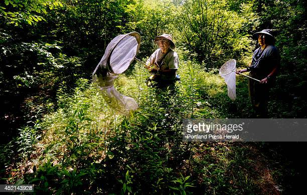 Bob Gobeil uses his net to catch a butterfly as he and and his wife Rose Marie Gobeil survey butterflies along the Sylvan trail in Saco Tuesday July...