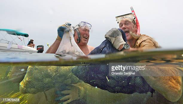 Bob Horne of Miami Florida left and Tom Brechtel of the Villages in Sumter County dive for scallops June 21 2010 in the Gulf of Mexico three miles...