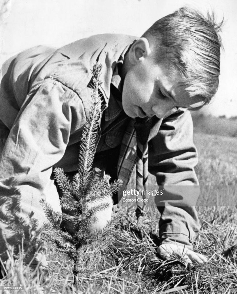Bobby O'Brien, 11, Canton South, plants an evergreen tree during a tree sale to aid the John F. Kennedy Library fund in Canton, Mass., on May 2, 1964.