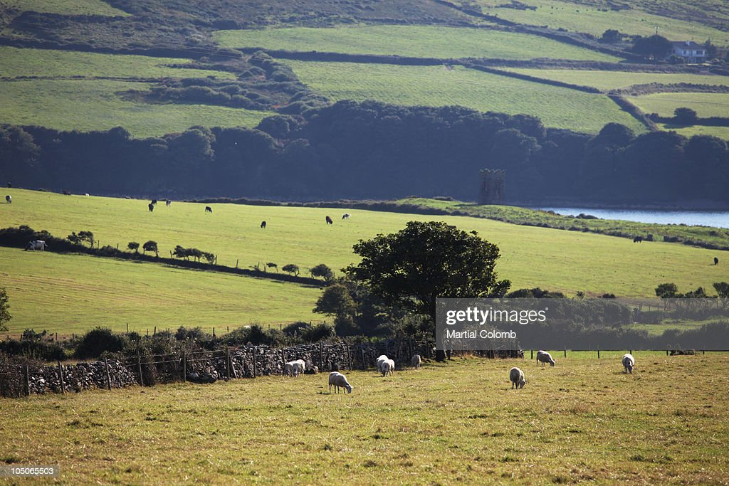 bocage in Kerry area : Stock Photo