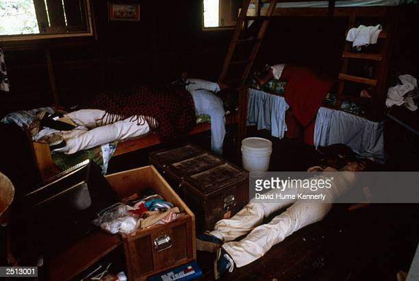 Bodies lie in a bedroom at the compound of the People's Temple cult November 18 1978 in Jonestown Guyana after over 900 members of the cult led by...