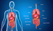 Two or more organs working together in the execution of a specific body function form an organ system.