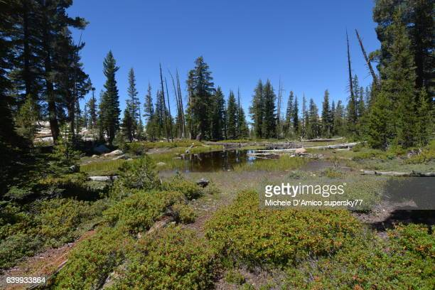 Bog and pond in a subalpine High Sierra forest
