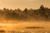 Misty bog landscape in the morning