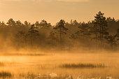 Misty bog landscape in the morning
