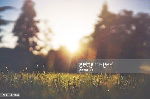 Bokeh Sunset : Stock Photo