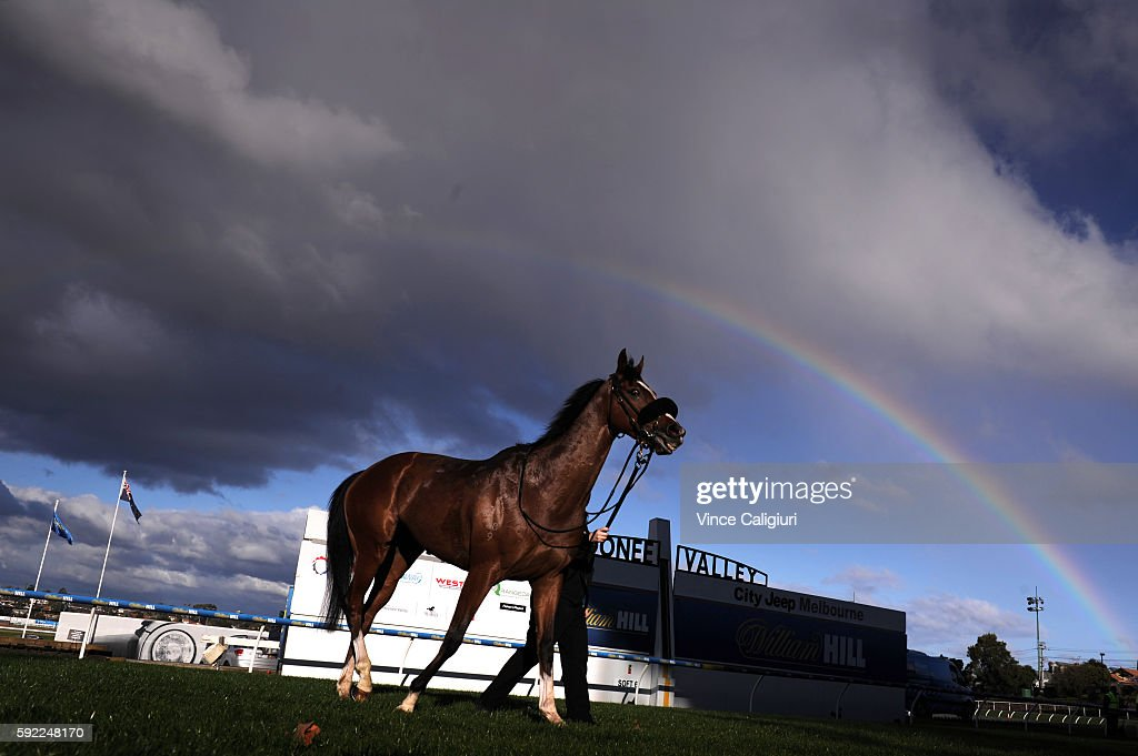 Bold Sniper after winning Race 6, during Melbourne Racing at Moonee Valley Racecourse on August 20, 2016 in Melbourne, Australia.
