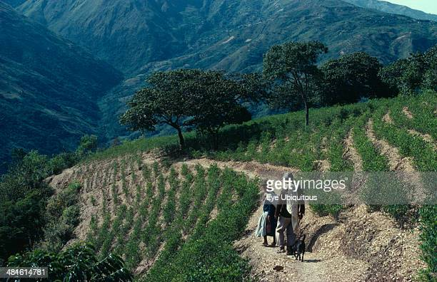 Bolivia Chapare Man and woman with a dog walking through coca terraces Traditional commercial coca growing area mainly for cocaine