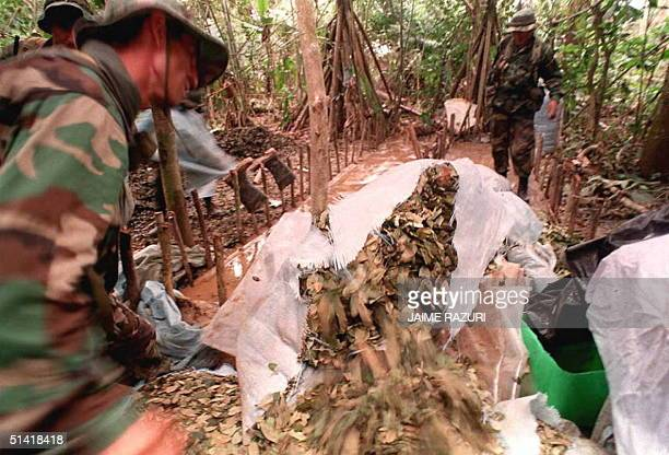 Bolivian army drug enforcement troops destroy coca leaves found at a makeshift chemical lab in El Chapare Bolivia 19 November The lab was used to mix...