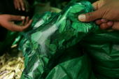 Bolivian buys coca leaves on the street December 11 2005 in La Paz Bolivia Bolivia one of the poorest countries in South America is about to face a...