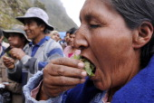 A Bolivian peasant chews coca leaves in Las Yungas northeast from La Paz on October 19 2010 Bolivia will demand before the UN Economic and Social...