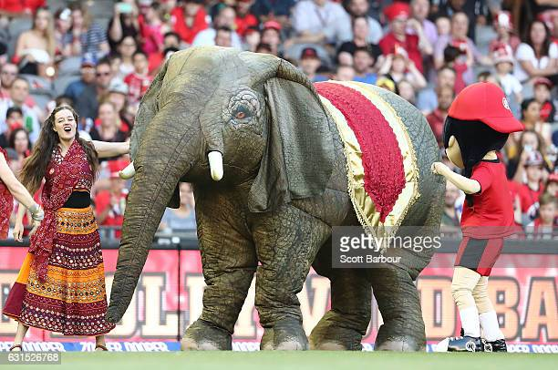 Bollywood dancers and a replica Elephant dance on the field during the Big Bash League match between the Melbourne Renegades and the Hobart...