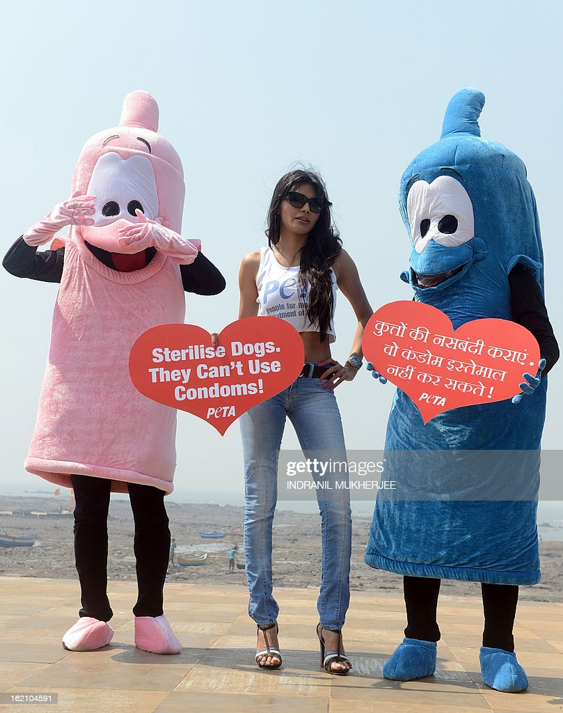 Bollywood film actress and model Sherlyn Chopra, (C), along with two members of People for the Ethical Treatment of Animals (PETA) India dressed as giant condoms and holding signs that read 'Sterilise Dogs – They Can't Use Condoms!', poses during an awareness campaign in Mumbai on February 19, 2013. Chopra handed out leaflets encouraging people to get their dog and cat companions sterilised and raise awareness about animal birth control. AFP PHOTO/Indranil MUKHERJEE