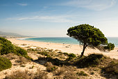 Bolonia beach close to Tarifa in Costa de la Luz, Andalusia, Southern Spain. Beautiful landscape of golden beach, coastal vegetation with stone pine tree. Turquoise Atlantic ocean,sunny winter day.