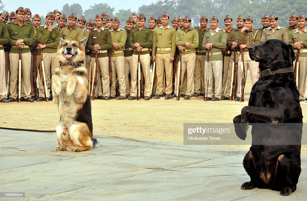 Bomb disposal and dog squad perform at Harsaon police lines as part of rehearsal for forthcoming Republic Day celebrations on January 26, on January 16, 2013 in Ghaziabad, India.
