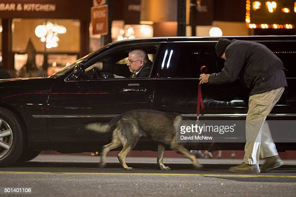 A bomb sniffing dog investigates cars carrying red carpet guests to the arrivals area of the premiere of Walt Disney Pictures And Lucasfilm's 'Star...