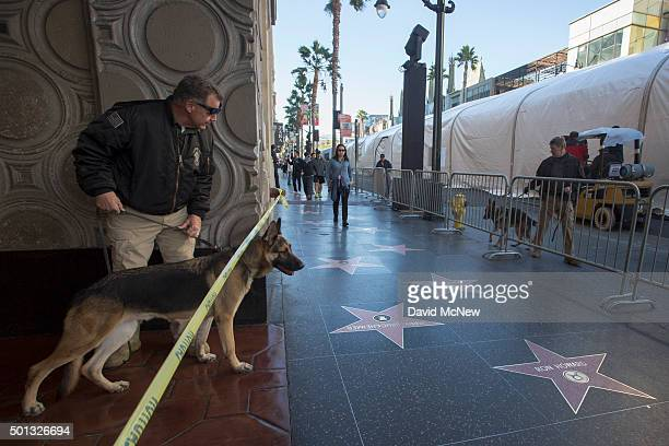 Bomb sniffing dogs sweep areas along Hollywood Boulevard before the start of the premiere of Walt Disney Pictures And Lucasfilm's 'Star Wars The...
