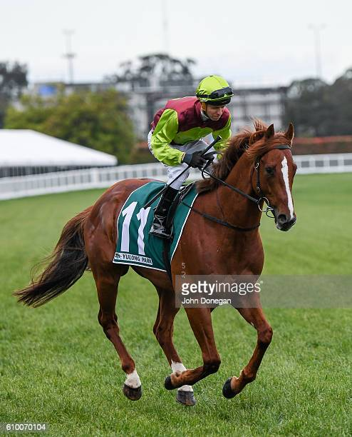 Bon Aurum ridden by Kerrin McEvoy heads to the barrier before Yulong Park Sir Rupert Clarke Stakes at Caulfield Racecourse on September 24 2016 in...