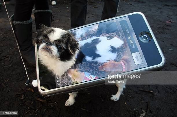 Bon the dog poses as an iPhone during the 17th annual Tompkins Square Halloween Dog Parade October 28 2007 in New York City The event is the largest...