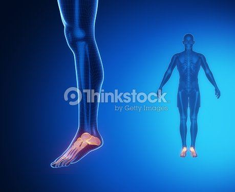 Ankle Bone Anatomy Xray Scan Stock Photo | Thinkstock