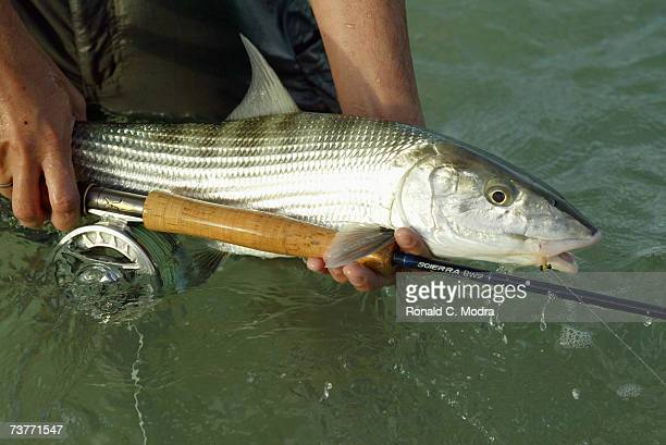 Bonefish caught on May 18 2005 in the Florida Keys