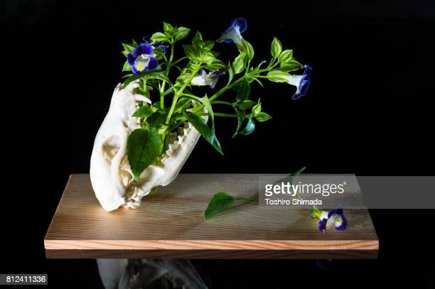 Bones and flowers