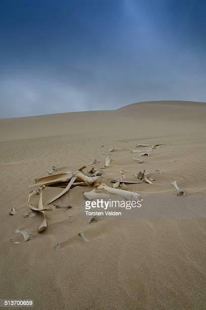 Bones in Dunes