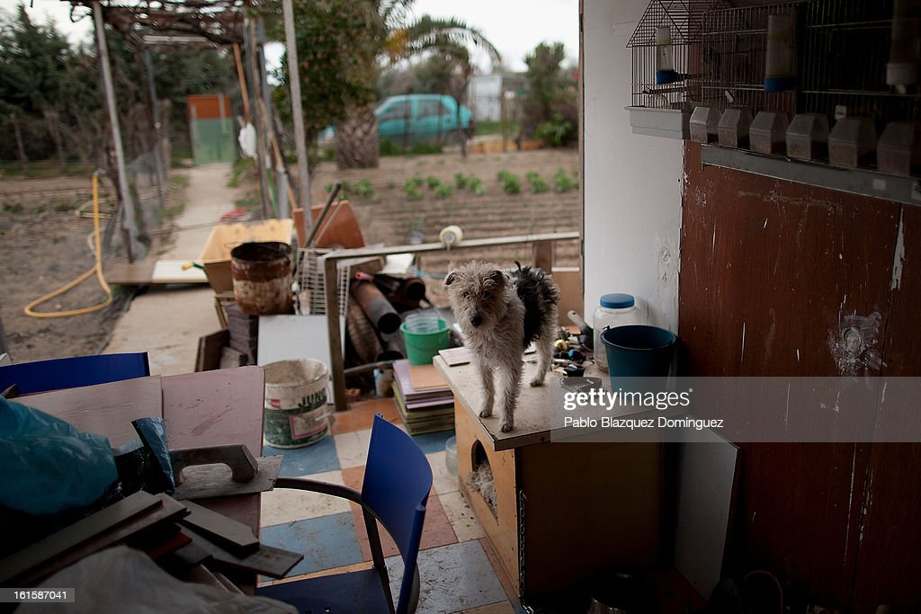 'Boni' stands at the entrance of the hut which serves as the home of his owner Domingo Alcazar (not pictured) at his allotment, which stands on the site of the the new Eurovegas complex is planned to be constructed on February 10, 2013 in Alcorcon, near Madrid, Spain. Domingo, who is unemployed after having worked previously in the construction industry, lives on the allotment because he cannot afford to pay standard accomdation rent fees. Controversial plans have been given the go ahead for the Las Vegas Sands Corporation to build Europe's biggest casino and conference centre on the outskirts of Madrid bringing thousands of much needed jobs for the Spanish economy. As multi billionaire investor Sheldon Adelson's announced his plans protestors were claiming that the 36,000 room hotel complex would bring gambling addiction, criminal activity, prostitution and environmental damage to the area.