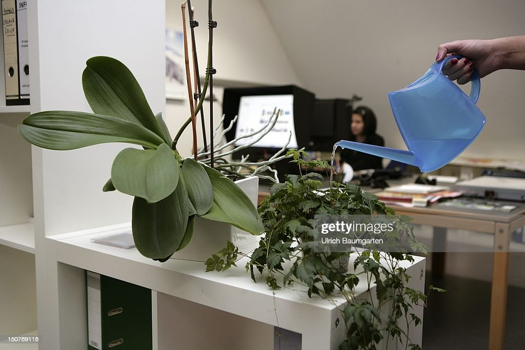 GERMANY, Bonn, Flowers, pour in the office