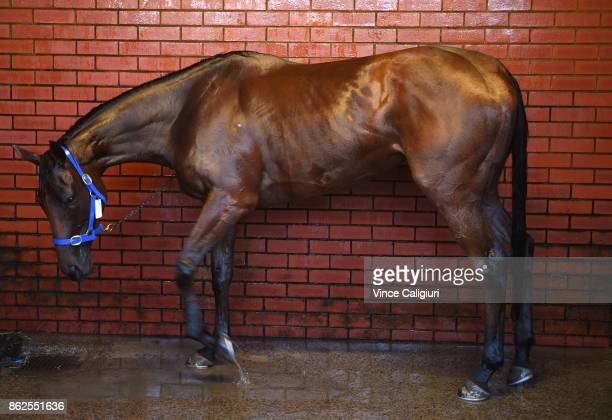 Bonneval is hosed down after a Trackwork Session at Flemington Racecourse on October 18 2017 in Melbourne Australia Murray Baker Andrew Forsman...