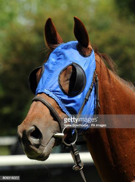 Bonnie Prince Blue wears blinkers ahead of the SIS Live Claiming Stakes at Ripon Racecourse