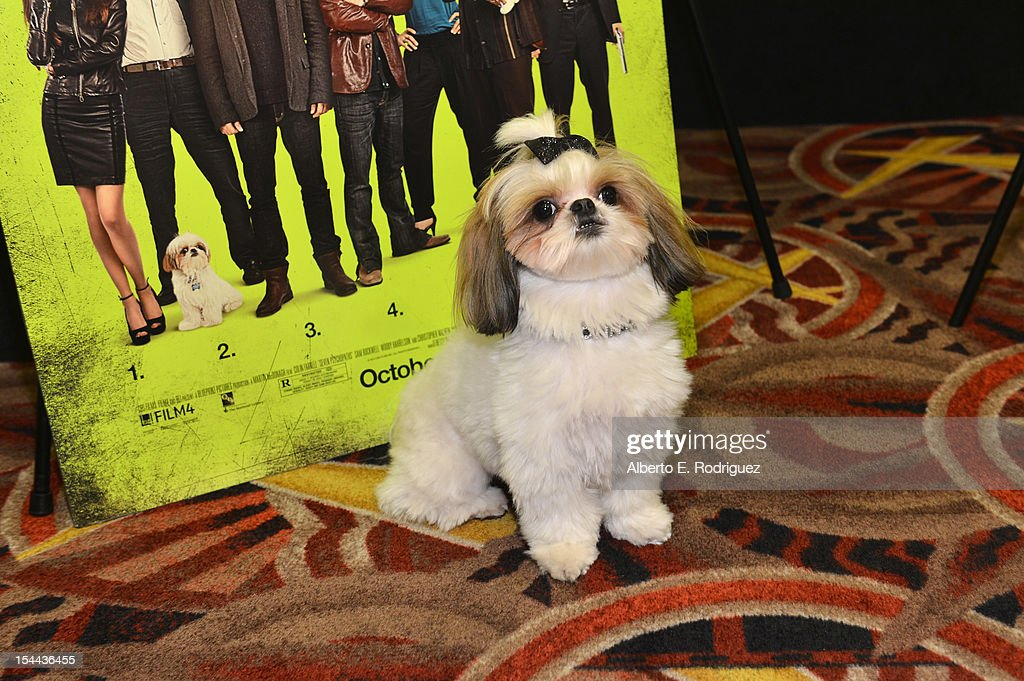 Bonny the ShihTzu attends a screening of CBS Films' 'Seven Psychopaths' celebrating the Certified Fresh Rating from RottenTomatoes.com at AMC Century City 15 theater on October 19, 2012 in Century City, California.