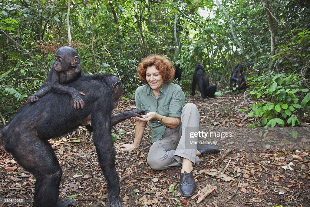 Bonobos (Pan paniscus) with Claudine Andre. The Founder of Sanctuary Lola Ya Bonobo Chimpanzee Democratic Republic of the Congo