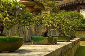 Singapore. Japanese garden. 300-year-old dwarf bonsai trees