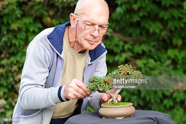 Bonsai Maestro