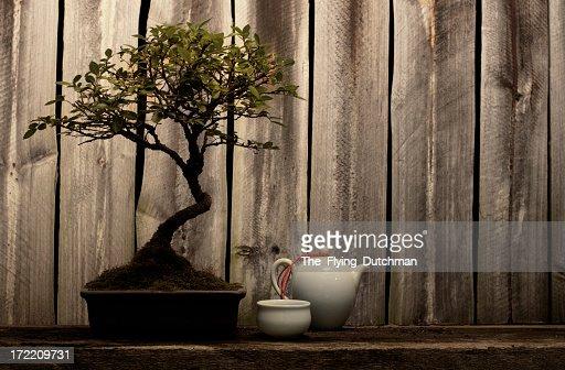 Bonsai Series